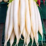 Baltieji ridikai ir jų auginimas