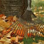 rudens darbai