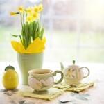 Narcizų auginimas